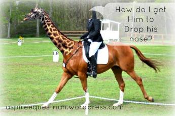giraffe-horse