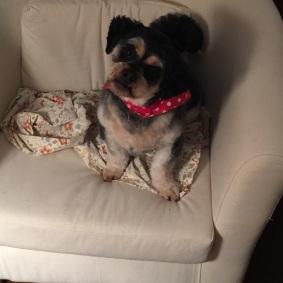 Ollie on chair
