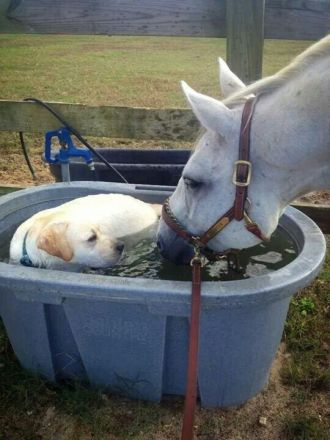 9adfab0f3d9d988f102934f59455db03--horses-and-dogs-cute-horses