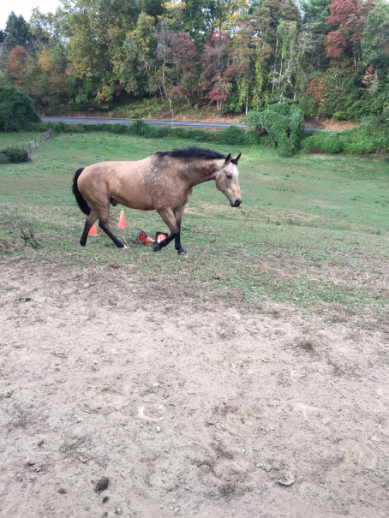 download (36)