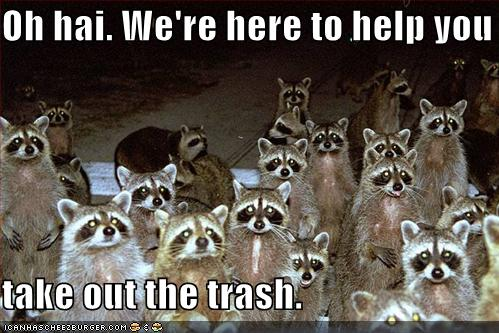 Image result for raccoon gif